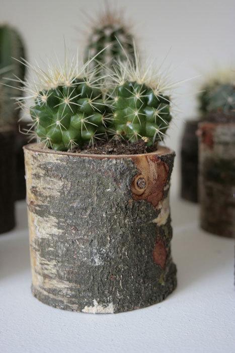 Cactus in boomstammetje