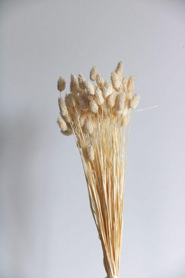 droogbloemen-1